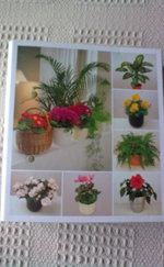 Szobanövények Á-tól Z-ig